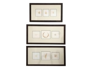 Framed Natural Botanicals
