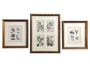 3 Framed Hand Colored Botanical Engraving by T. Schaly