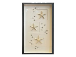 Framed Mounted Starfish and Small Seashells